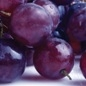 Small bunch of purple grapes